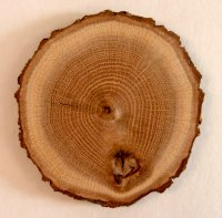 Tree ring small
